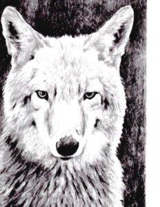 Wild Coyote by Geoffrey Vollers